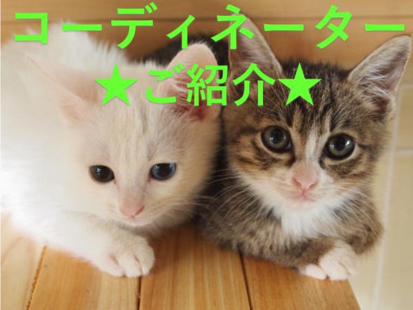 弊社コーディネーターご紹介 イメージ